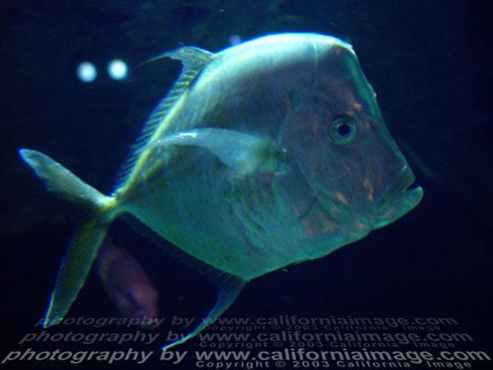 Las vegas casino fish photo for Tropical fish las vegas